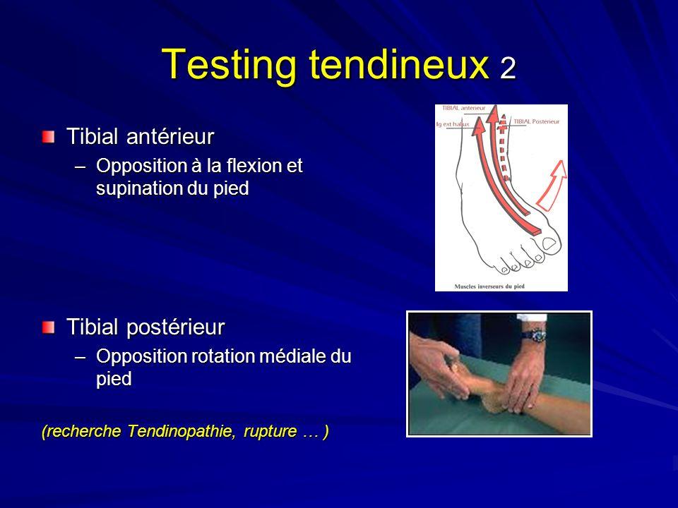 Testing tendineux 2 Tibial antérieur –Opposition à la flexion et supination du pied Tibial postérieur –Opposition rotation médiale du pied (recherche