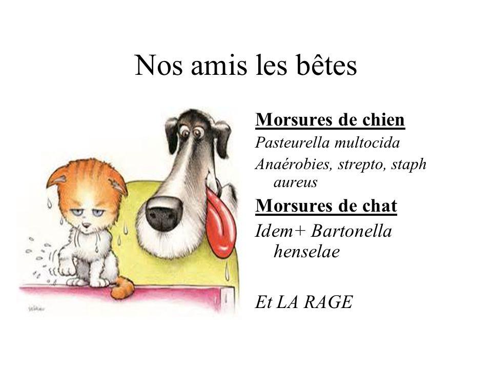 Nos amis les bêtes Morsures de chien Pasteurella multocida Anaérobies, strepto, staph aureus Morsures de chat Idem+ Bartonella henselae Et LA RAGE