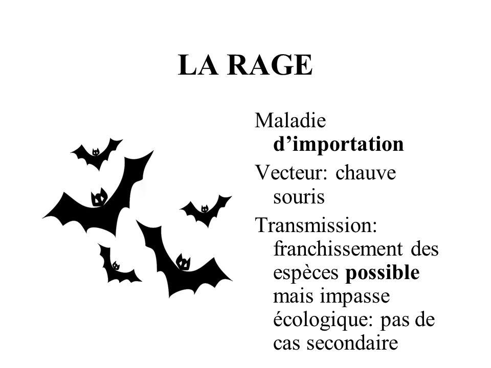 LA RAGE Maladie dimportation Vecteur: chauve souris Transmission: franchissement des espèces possible mais impasse écologique: pas de cas secondaire
