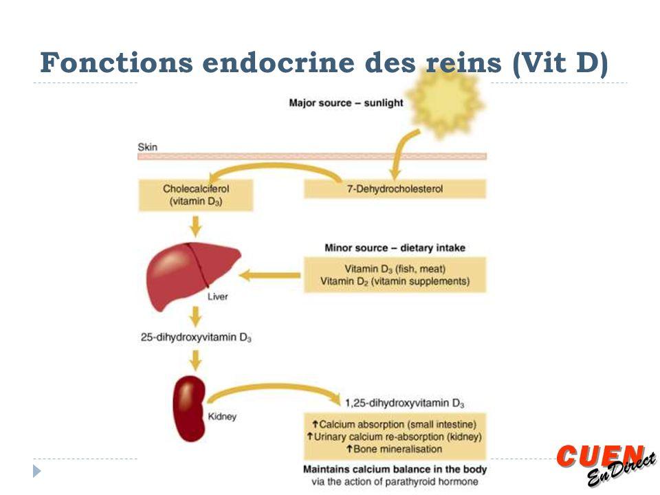 Fonctions endocrine des reins (Vit D)
