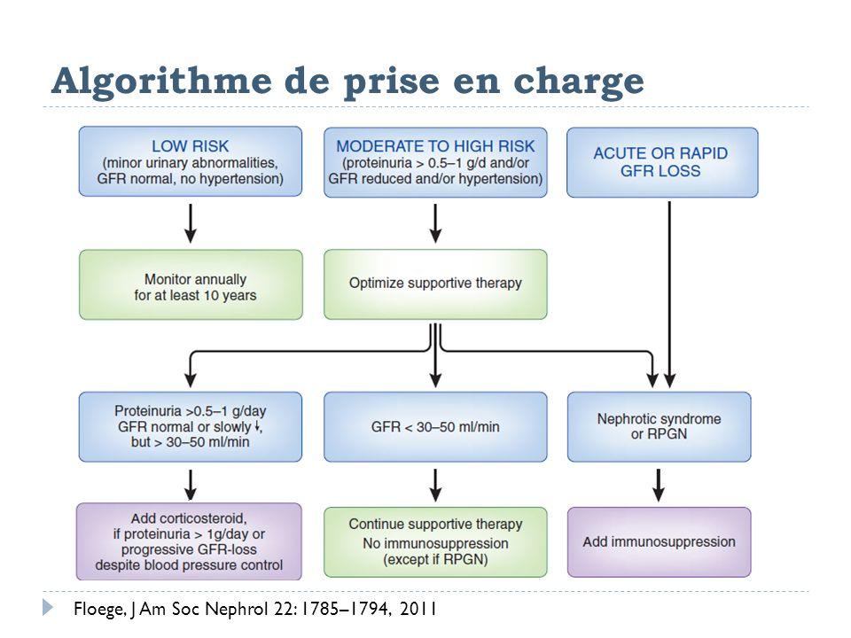 Algorithme de prise en charge Floege, J Am Soc Nephrol 22: 1785–1794, 2011