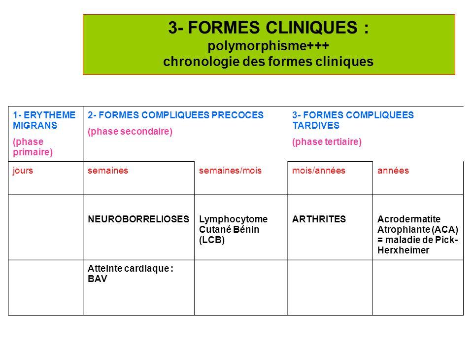 11 3- FORMES CLINIQUES : polymorphisme+++ chronologie des formes cliniques 1- ERYTHEME MIGRANS (phase primaire) 2- FORMES COMPLIQUEES PRECOCES (phase