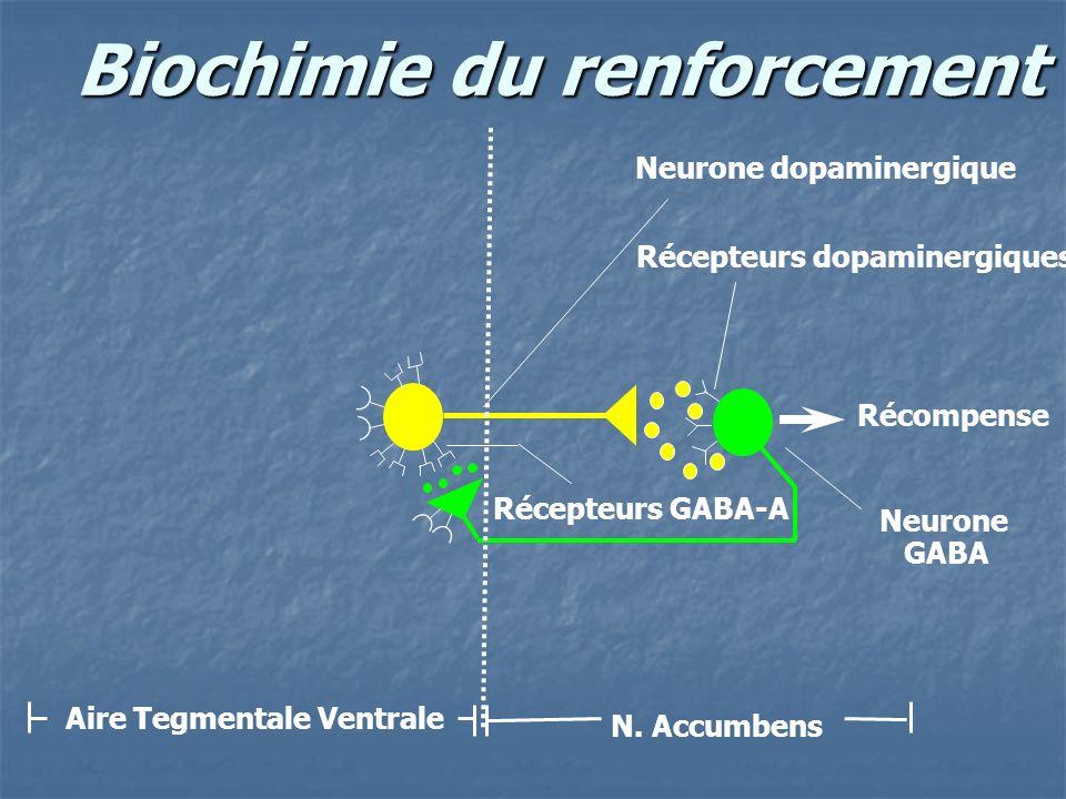 Biochimie du renforcement Récompense Neurone dopaminergique Neurone GABA Aire Tegmentale Ventrale N. Accumbens Récepteurs dopaminergiques Récepteurs G