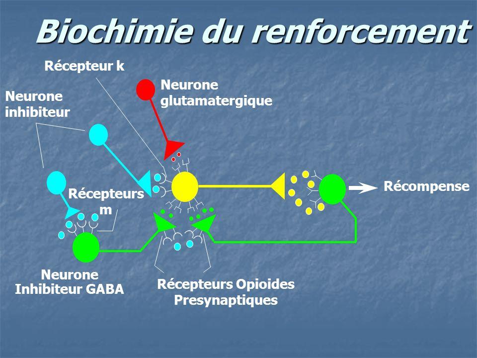 Biochimie du renforcement Neurone inhibiteur Récompense Neurone glutamatergique Neurone Inhibiteur GABA Neurone dopaminergique Neurone GABA Aire Tegmentale Ventrale N.