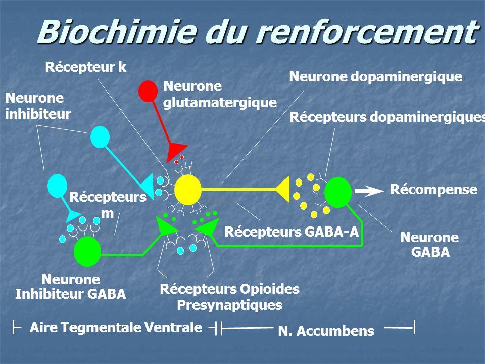 Biochimie du renforcement Neurone inhibiteur Récompense Neurone glutamatergique Neurone Inhibiteur GABA Neurone dopaminergique Neurone GABA Aire Tegme