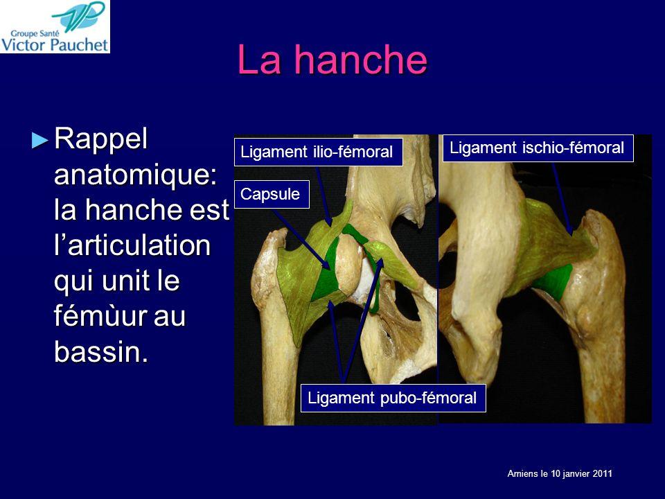 La hanche Rappel anatomique: la hanche est larticulation qui unit le fémùur au bassin.