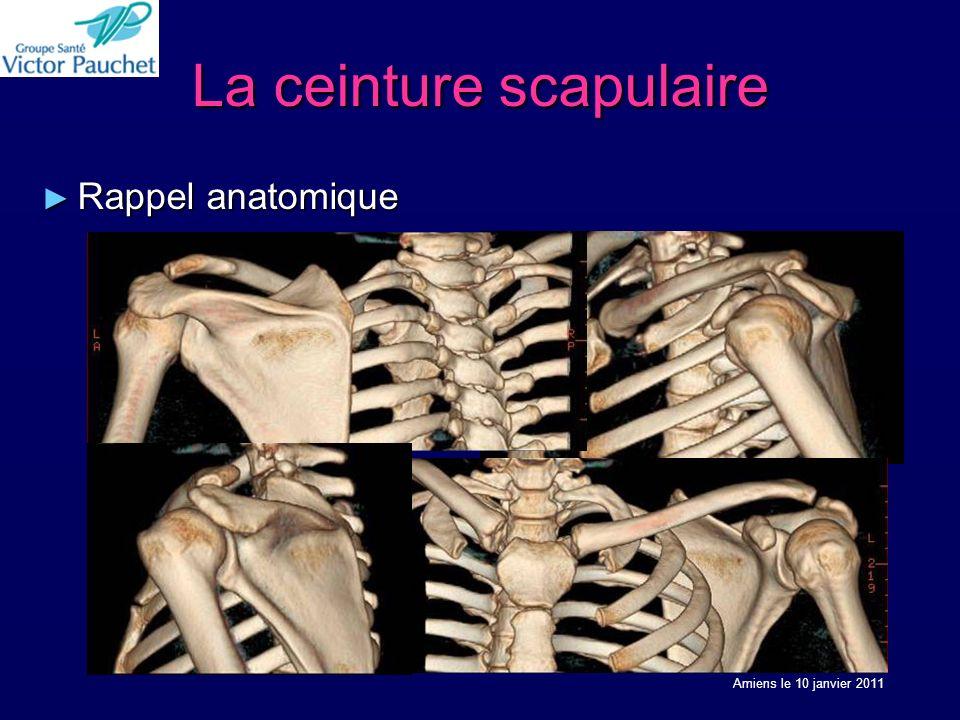 La ceinture scapulaire Rappel anatomique Rappel anatomique Amiens le 10 janvier 2011