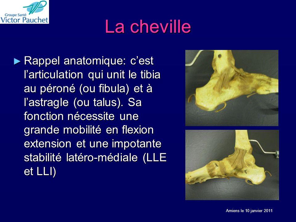 La cheville Rappel anatomique: cest larticulation qui unit le tibia au péroné (ou fibula) et à lastragle (ou talus). Sa fonction nécessite une grande