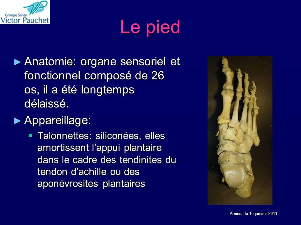Le pied Anatomie: organe sensoriel et fonctionnel composé de 26 os, il a été longtemps délaissé. Anatomie: organe sensoriel et fonctionnel composé de