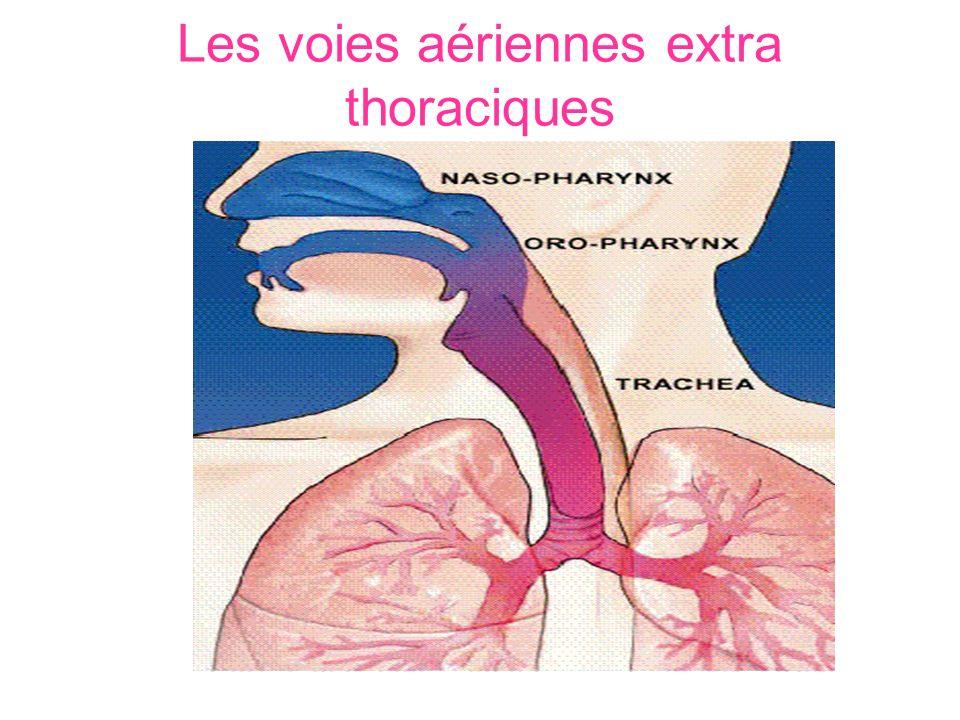 Les voies aériennes inférieures parties intra thoracique 6 - Bronches 7 - Bronchioles 8 - Alvéoles 2 - Pharynx 1 - Fosses nasales 3 - Larynx 4 - Trachée 5 - Bronches souches