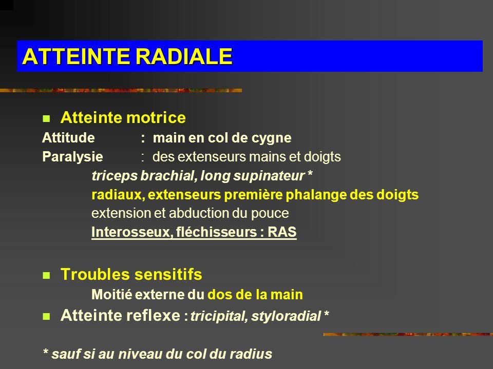 ATTEINTE RADIALE Atteinte motrice Attitude : main en col de cygne Paralysie : des extenseurs mains et doigts triceps brachial, long supinateur * radia
