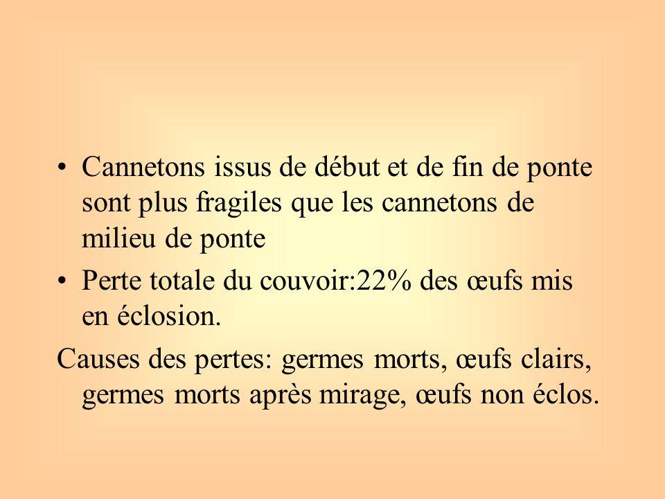 Cannetons issus de début et de fin de ponte sont plus fragiles que les cannetons de milieu de ponte Perte totale du couvoir:22% des œufs mis en éclosi