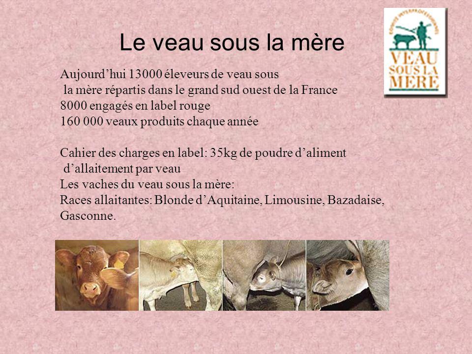 Le veau sous la mère Aujourdhui 13000 éleveurs de veau sous la mère répartis dans le grand sud ouest de la France 8000 engagés en label rouge 160 000