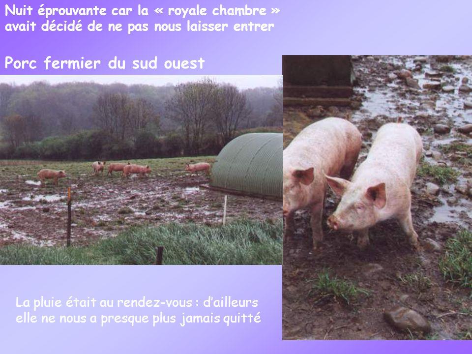 Nuit éprouvante car la « royale chambre » avait décidé de ne pas nous laisser entrer Porc fermier du sud ouest La pluie était au rendez-vous : dailleurs elle ne nous a presque plus jamais quitté