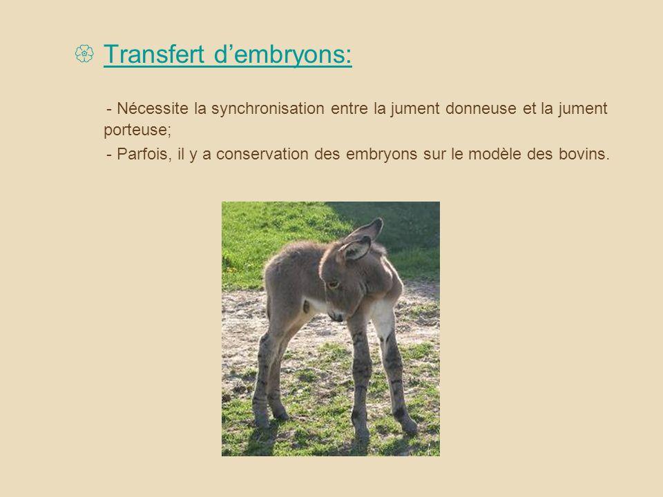 Transfert dembryons: - Nécessite la synchronisation entre la jument donneuse et la jument porteuse; - Parfois, il y a conservation des embryons sur le modèle des bovins.