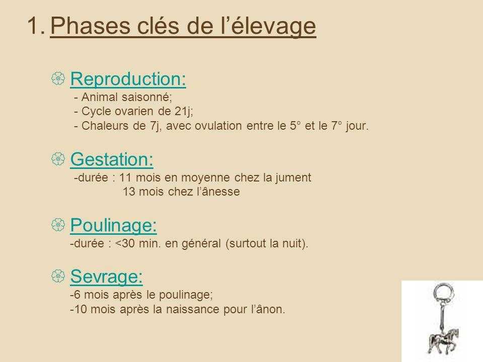 1.Phases clés de lélevage Reproduction: - Animal saisonné; - Cycle ovarien de 21j; - Chaleurs de 7j, avec ovulation entre le 5° et le 7° jour.