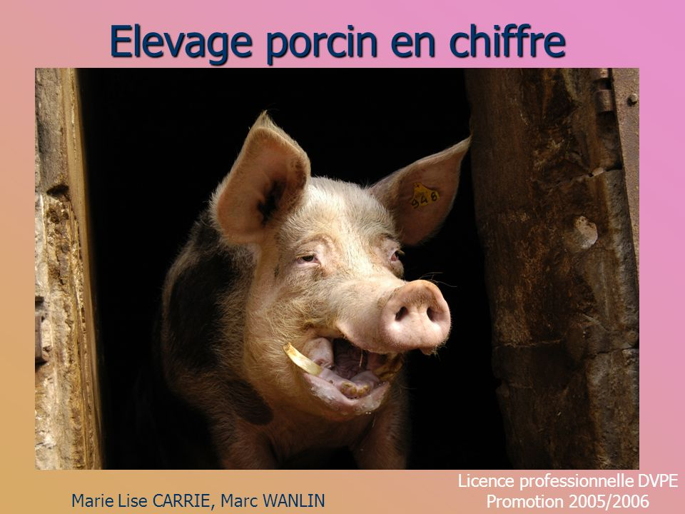 Elevage porcin en chiffre Marie Lise CARRIE, Marc WANLIN Licence professionnelle DVPE Promotion 2005/2006