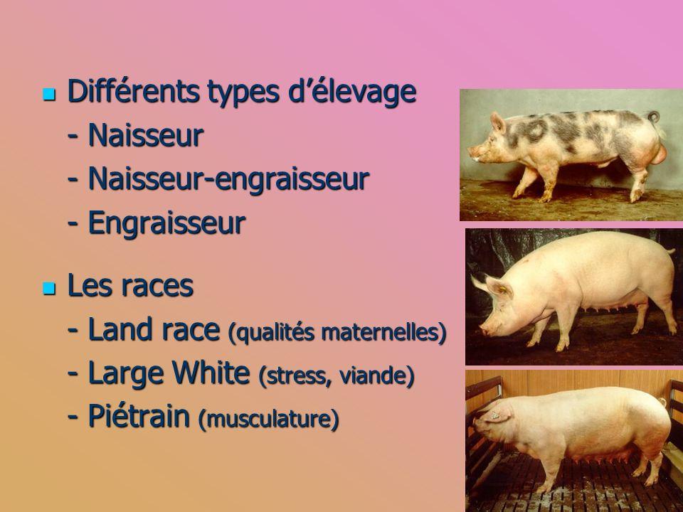 Différents types délevage Différents types délevage - Naisseur - Naisseur-engraisseur - Engraisseur Les races Les races - Land race (qualités maternel
