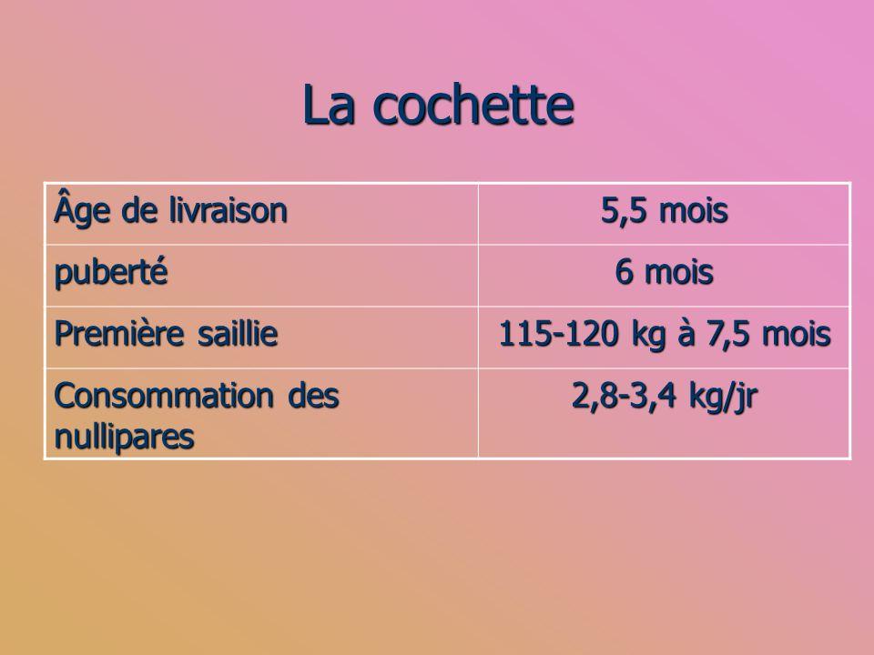 La cochette Âge de livraison 5,5 mois puberté 6 mois Première saillie 115-120 kg à 7,5 mois Consommation des nullipares 2,8-3,4 kg/jr