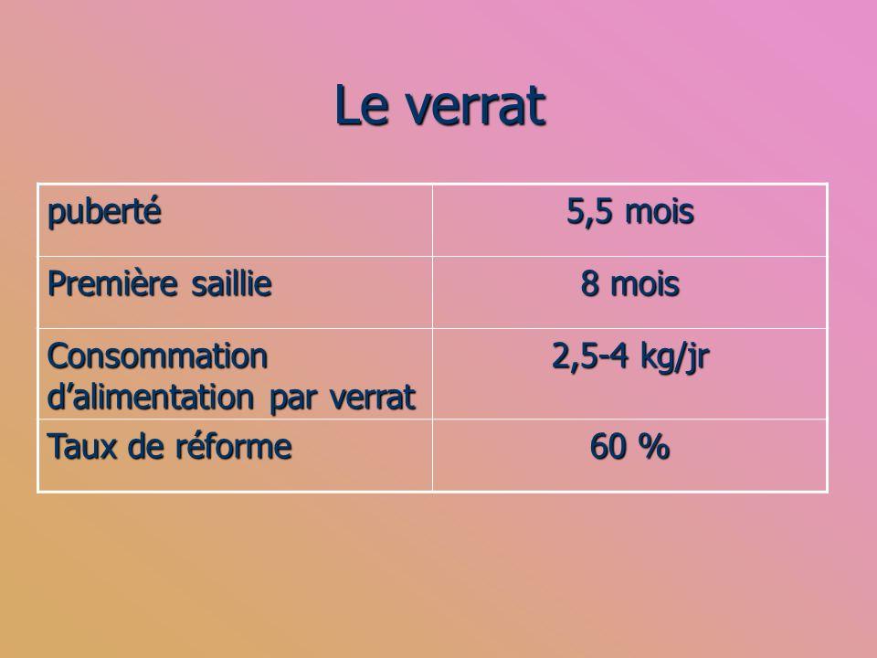 Le verrat puberté 5,5 mois Première saillie 8 mois Consommation dalimentation par verrat 2,5-4 kg/jr Taux de réforme 60 %