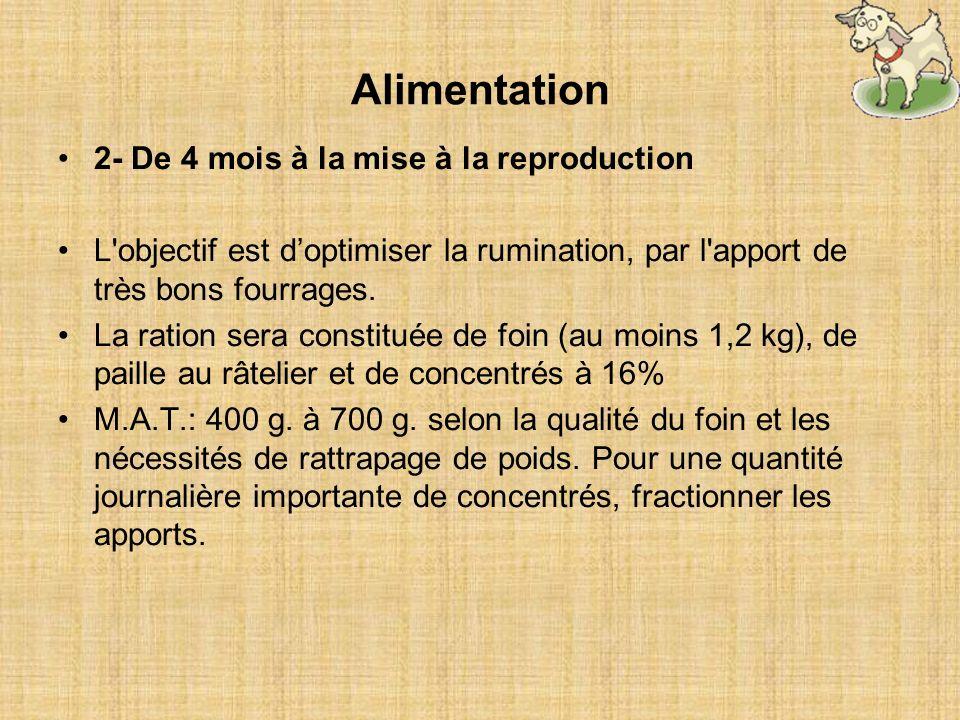 2- De 4 mois à la mise à la reproduction L'objectif est doptimiser la rumination, par l'apport de très bons fourrages. La ration sera constituée de fo