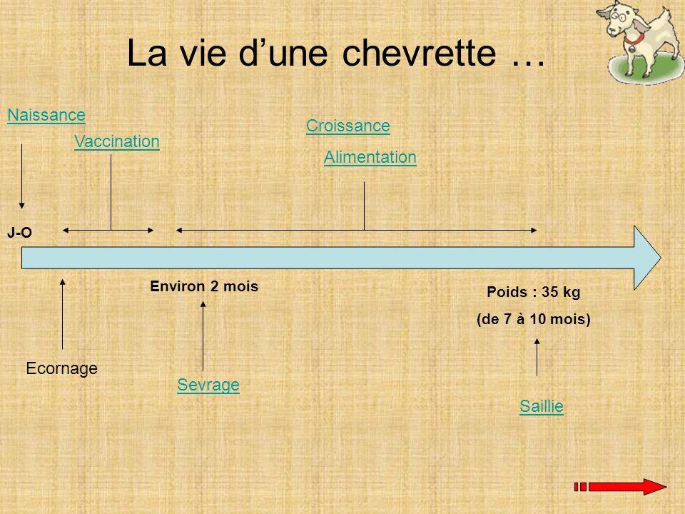 Naissance J-O Environ 2 mois Sevrage Ecornage Vaccination La vie dune chevrette … Croissance Alimentation Poids : 35 kg (de 7 à 10 mois) Saillie