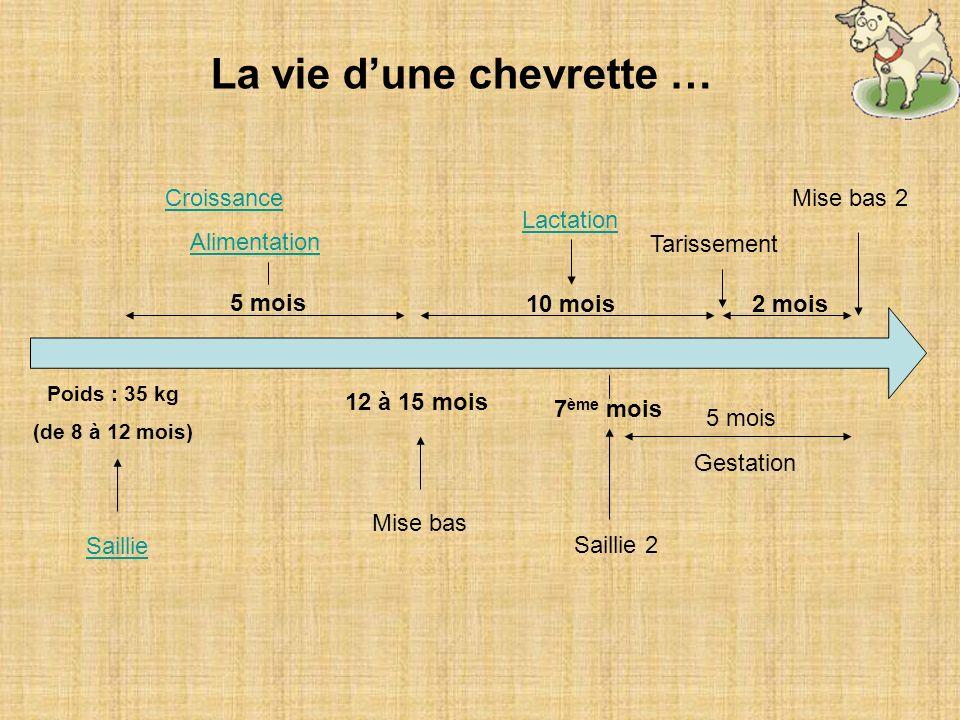 La vie dune chevrette … Poids : 35 kg (de 8 à 12 mois) Saillie 5 mois 12 à 15 mois Mise bas Croissance Alimentation 10 mois2 mois Lactation Tarissemen