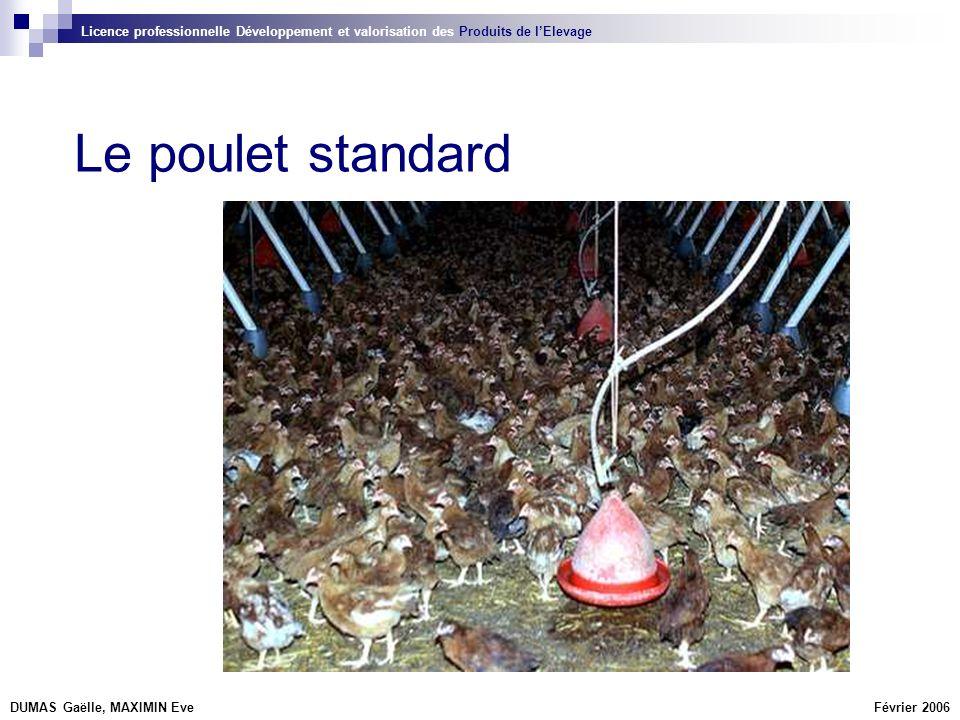 La filière En élevage de poulet de chair intensif, on utilise des hybrides standards (plumage blanc).