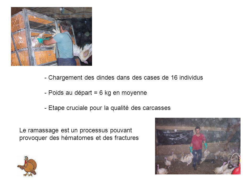 - Chargement des dindes dans des cases de 16 individus - Poids au départ = 6 kg en moyenne - Etape cruciale pour la qualité des carcasses Le ramassage