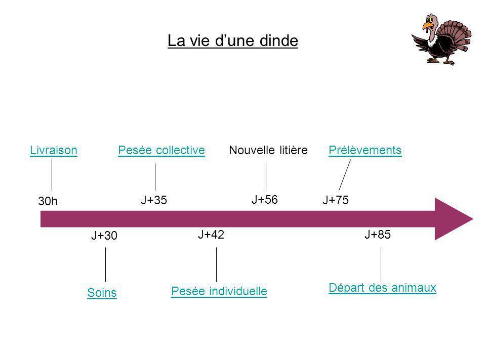La vie dune dinde Livraison 30h J+30 Soins J+35 Pesée collective J+42 Pesée individuelle J+56 Nouvelle litière J+85 Départ des animaux J+75 Prélèvemen