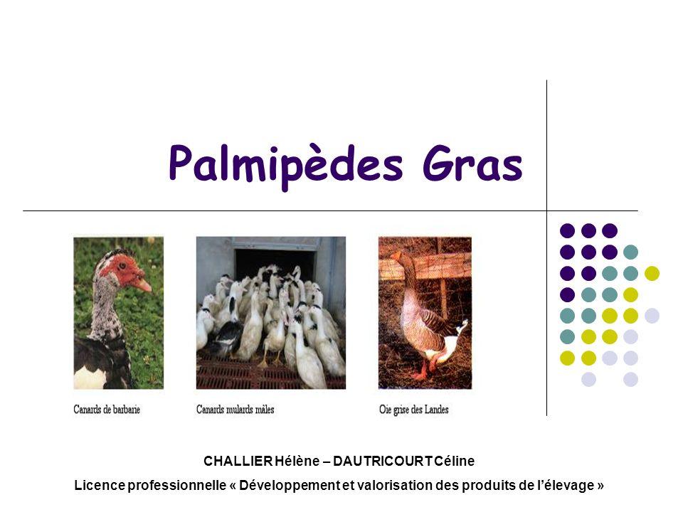 Palmipèdes Gras CHALLIER Hélène – DAUTRICOURT Céline Licence professionnelle « Développement et valorisation des produits de lélevage »