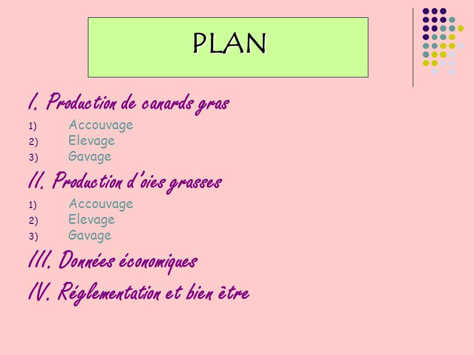 PLAN: I.Production de canards gras Accouvage Elevage Gavage II.