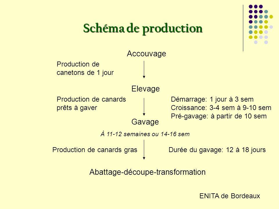 Schéma de production Accouvage Elevage Gavage À 11-12 semaines ou 14-16 sem Abattage-découpe-transformation Production de canetons de 1 jour Production de canards prêts à gaver Démarrage: 1 jour à 3 sem Croissance: 3-4 sem à 9-10 sem Pré-gavage: à partir de 10 sem Durée du gavage: 12 à 18 joursProduction de canards gras ENITA de Bordeaux
