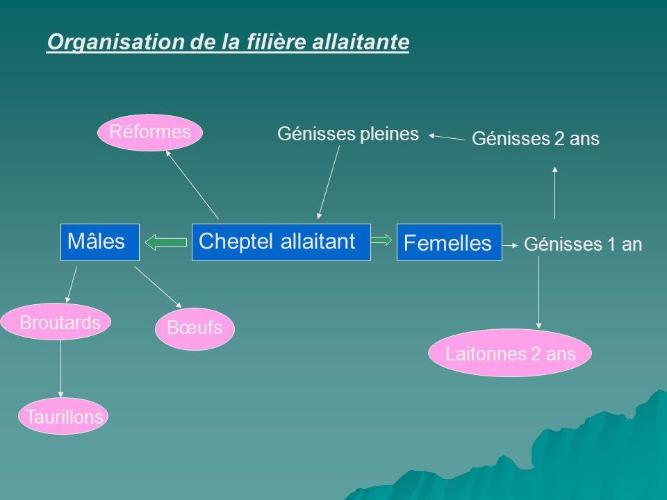 Cheptel allaitant Femelles Génisses 1 an Génisses 2 ans Génisses pleines Laitonnes 2 ans Mâles Broutards Taurillons Bœufs Réformes Organisation de la