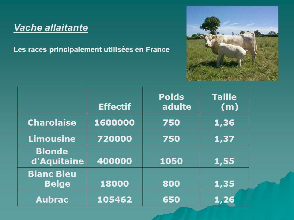 Vache allaitante Les races principalement utilisées en France Effectif Poids adulte Taille (m) Charolaise16000007501,36 Limousine7200007501,37 Blonde