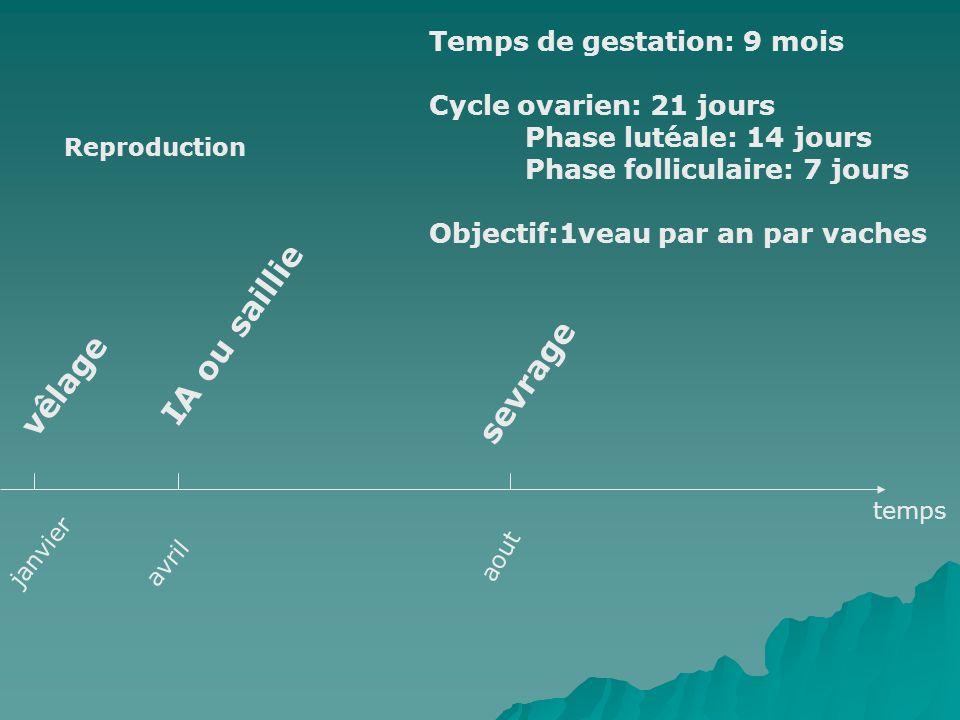 Reproduction janvier vêlage avril IA ou saillie aout sevrage temps Temps de gestation: 9 mois Cycle ovarien: 21 jours Phase lutéale: 14 jours Phase fo