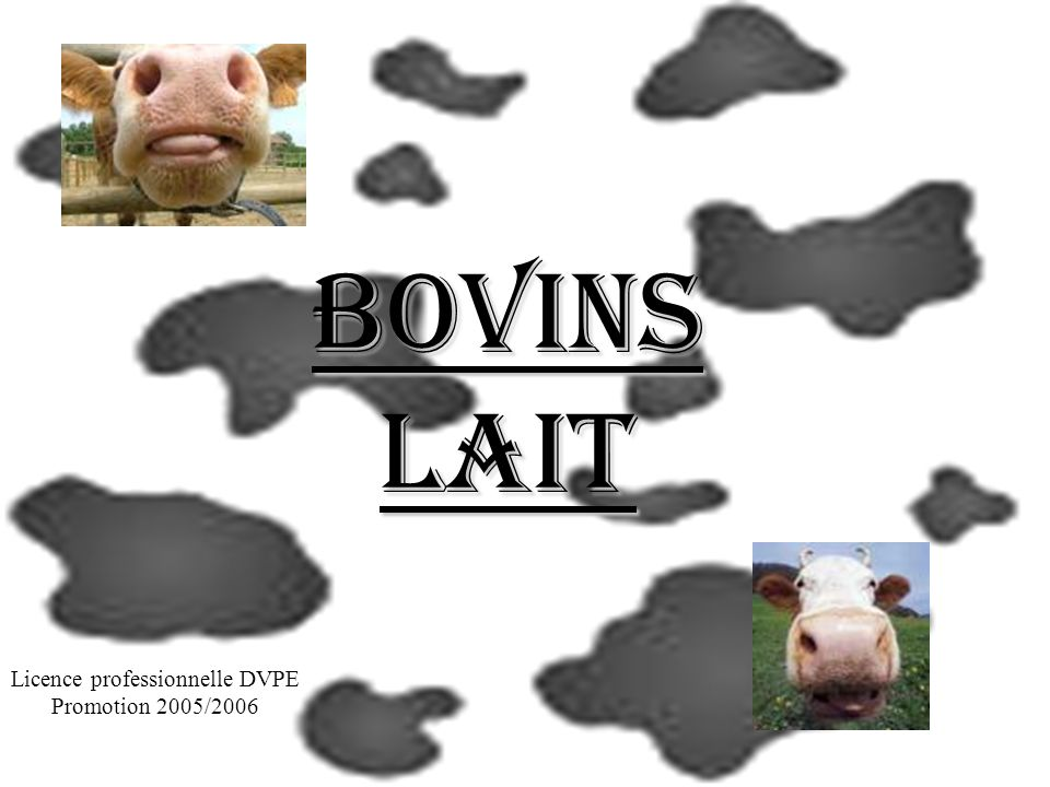 Bovins Lait Licence professionnelle DVPE Promotion 2005/2006