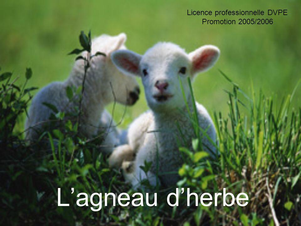 Lagneau dherbe Licence professionnelle DVPE Promotion 2005/2006