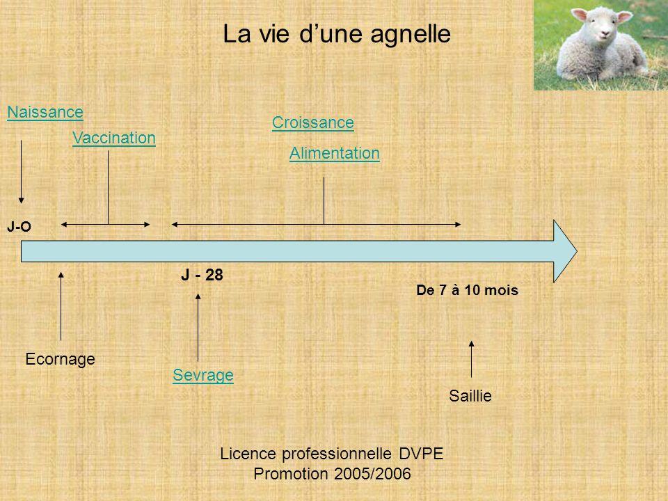Naissance J-O Sevrage Ecornage Vaccination La vie dune agnelle Croissance Alimentation De 7 à 10 mois Saillie J - 28 Licence professionnelle DVPE Prom