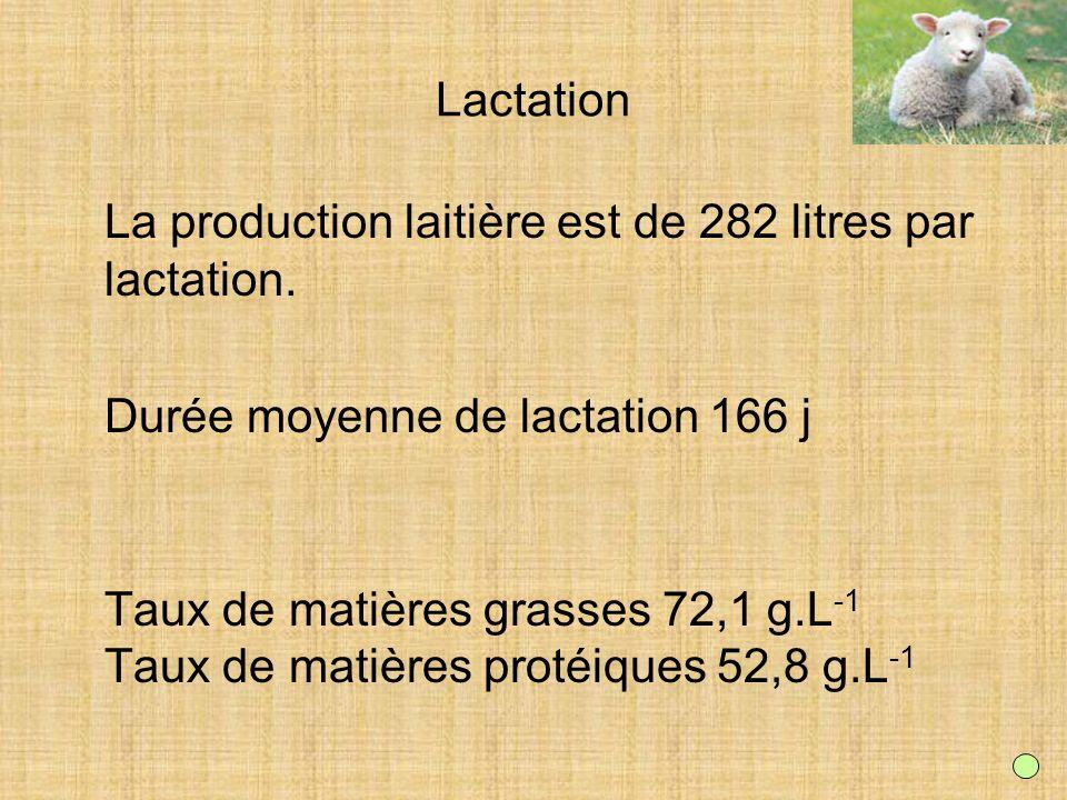 Lactation La production laitière est de 282 litres par lactation. Durée moyenne de lactation 166 j Taux de matières grasses 72,1 g.L -1 Taux de matièr