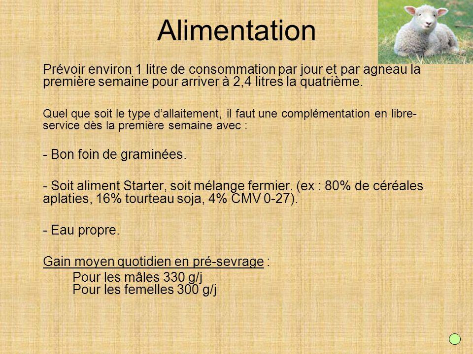 Alimentation Prévoir environ 1 litre de consommation par jour et par agneau la première semaine pour arriver à 2,4 litres la quatrième. Quel que soit