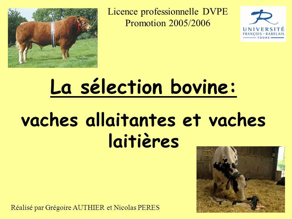 La sélection bovine: vaches allaitantes et vaches laitières Réalisé par Grégoire AUTHIER et Nicolas PERES Licence professionnelle DVPE Promotion 2005/