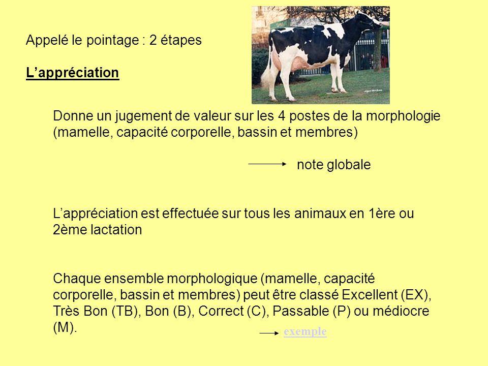Appelé le pointage : 2 étapes Lappréciation Donne un jugement de valeur sur les 4 postes de la morphologie (mamelle, capacité corporelle, bassin et me