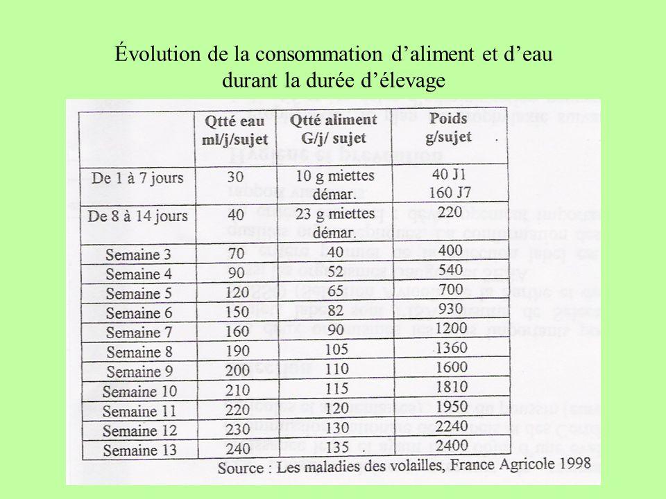 Évolution de la consommation daliment et deau durant la durée délevage