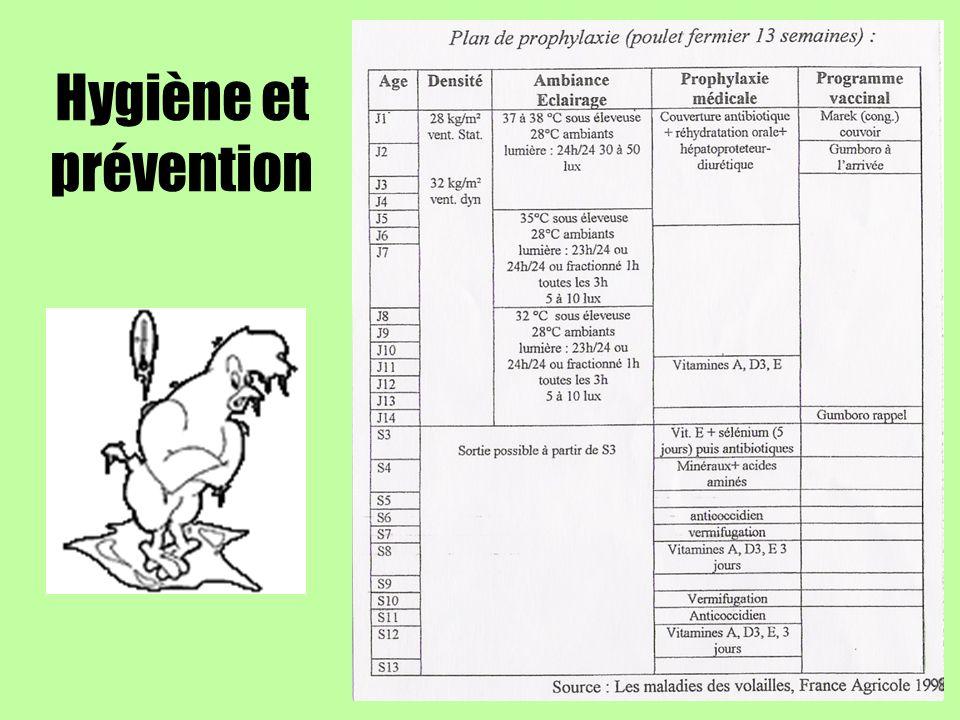 Hygiène et prévention