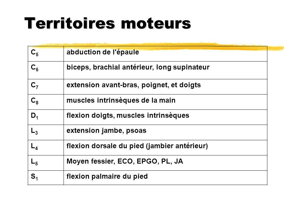 Territoires moteurs C5C5 abduction de l'épaule C6C6 biceps, brachial antérieur, long supinateur C7C7 extension avant-bras, poignet, et doigts C8C8 mus