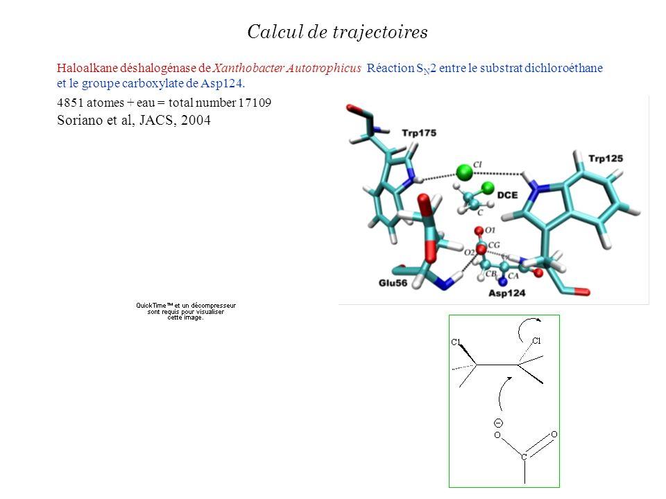 Haloalkane déshalogénase de Xanthobacter Autotrophicus Réaction S N 2 entre le substrat dichloroéthane et le groupe carboxylate de Asp124. 4851 atomes