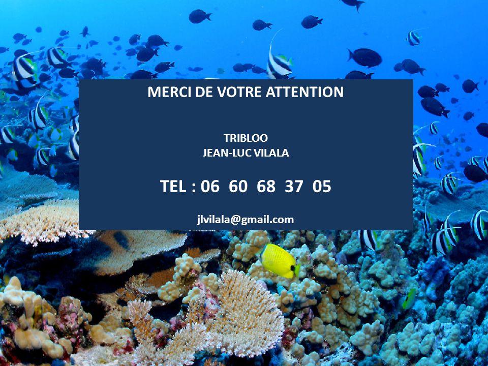 MERCI DE VOTRE ATTENTION TRIBLOO JEAN-LUC VILALA TEL : 06 60 68 37 05 jlvilala@gmail.com