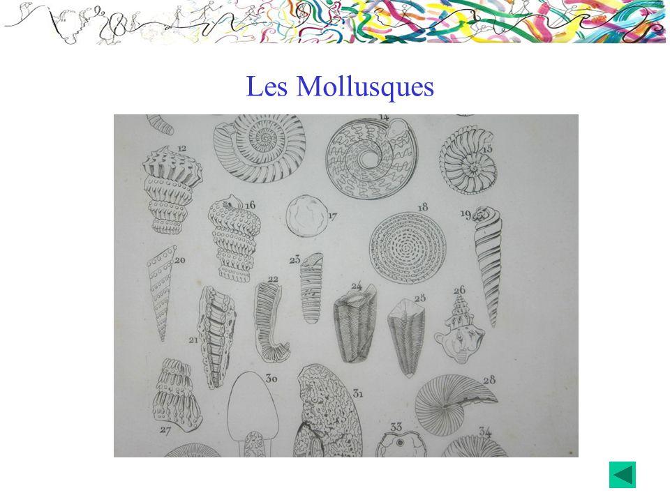 Les Mollusques
