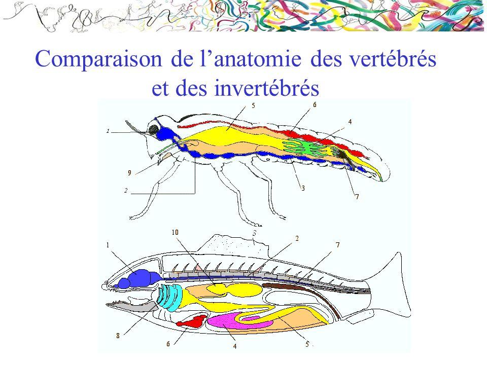 Comparaison de lanatomie des vertébrés et des invertébrés